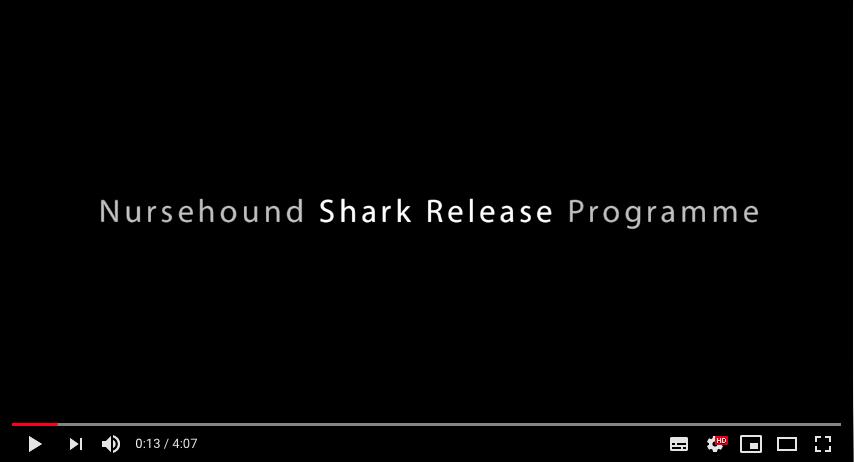 Nursehound Shark Release